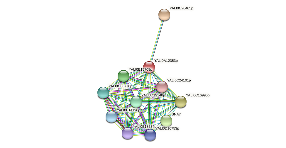 XP_500012.1 protein (Yarrowia lipolytica) - STRING interaction network