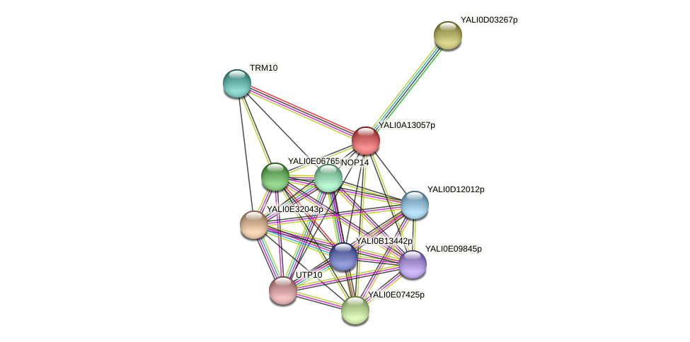 XP_500027.1 protein (Yarrowia lipolytica) - STRING interaction network