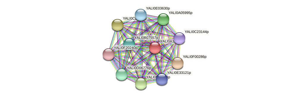 XP_500039.1 protein (Yarrowia lipolytica) - STRING interaction network