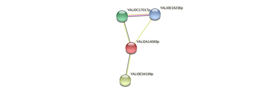XP_500049.1 protein (Yarrowia lipolytica) - STRING interaction network