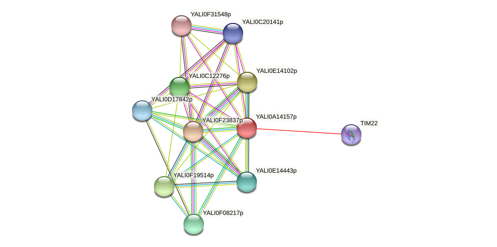 XP_500050.1 protein (Yarrowia lipolytica) - STRING interaction network