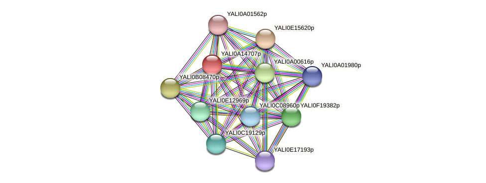 XP_500068.2 protein (Yarrowia lipolytica) - STRING interaction network