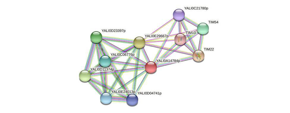 XP_500072.2 protein (Yarrowia lipolytica) - STRING interaction network