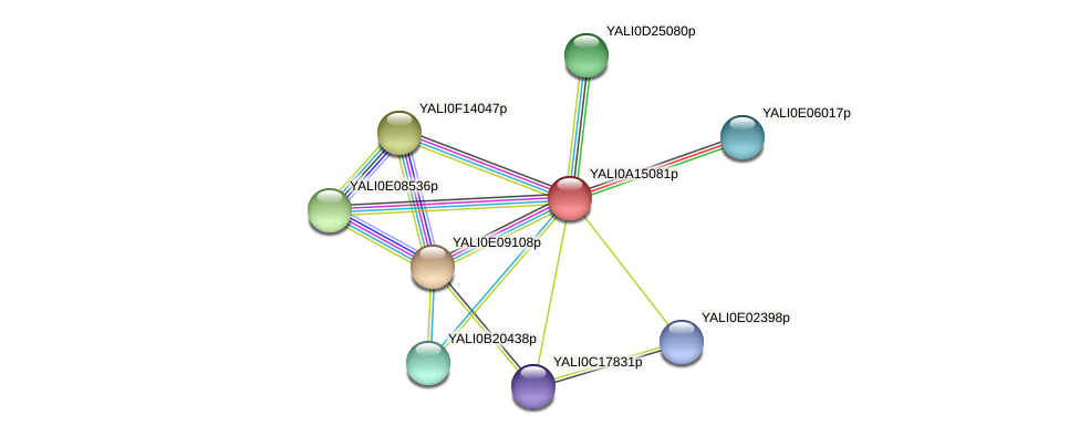 XP_500084.1 protein (Yarrowia lipolytica) - STRING interaction network