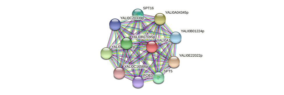 XP_500103.1 protein (Yarrowia lipolytica) - STRING interaction network