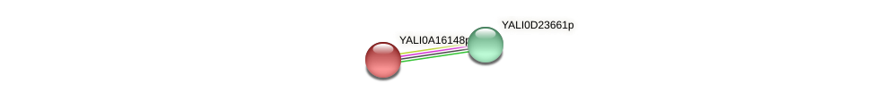 XP_500116.1 protein (Yarrowia lipolytica) - STRING interaction network