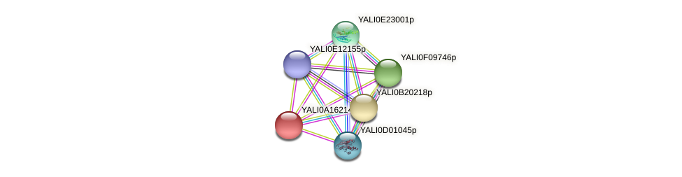 XP_500120.1 protein (Yarrowia lipolytica) - STRING interaction network