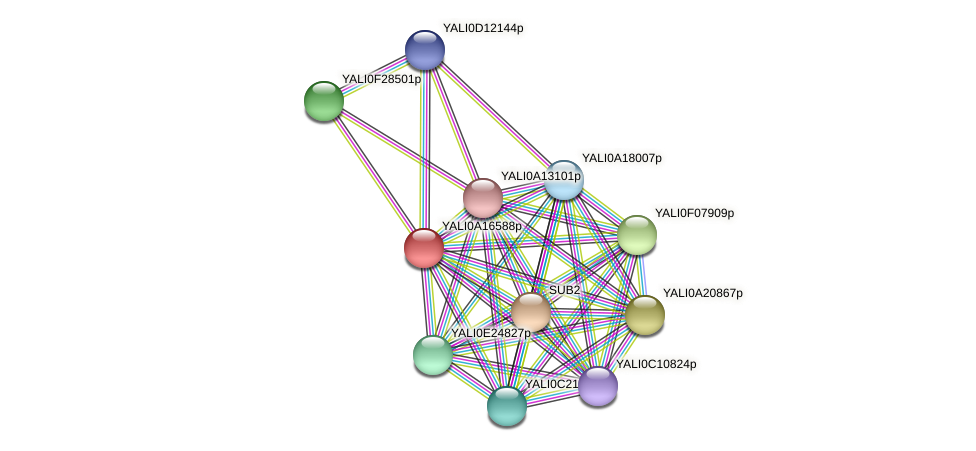 XP_500136.2 protein (Yarrowia lipolytica) - STRING interaction network