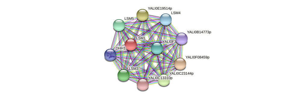 XP_500142.1 protein (Yarrowia lipolytica) - STRING interaction network