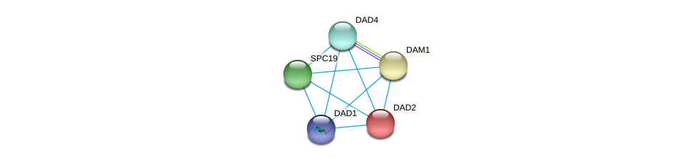 DAD2 protein (Yarrowia lipolytica) - STRING interaction network