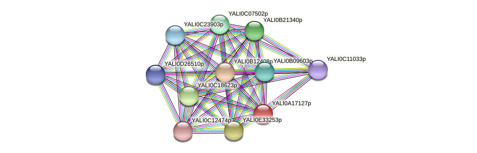 XP_500150.1 protein (Yarrowia lipolytica) - STRING interaction network