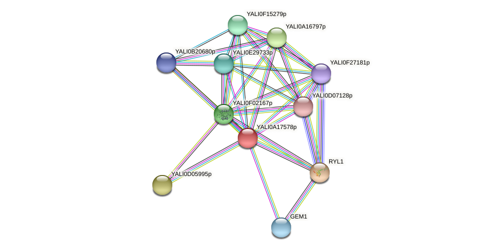 XP_500170.1 protein (Yarrowia lipolytica) - STRING interaction network