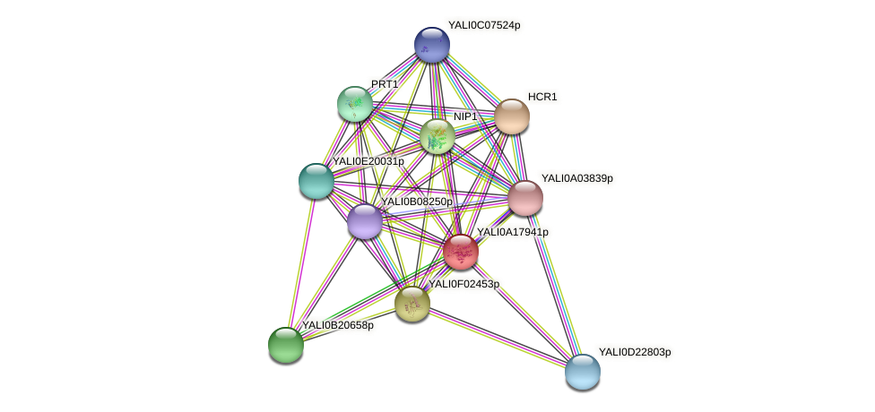 XP_500182.1 protein (Yarrowia lipolytica) - STRING interaction network