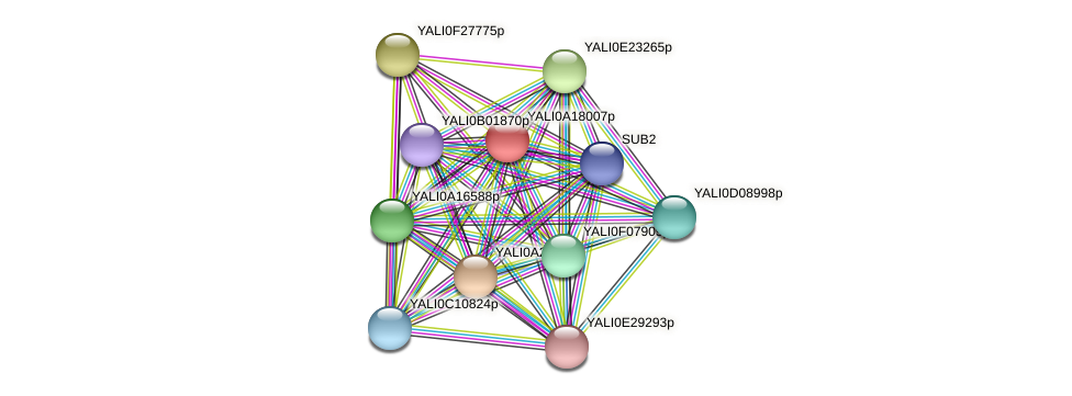 XP_500185.1 protein (Yarrowia lipolytica) - STRING interaction network
