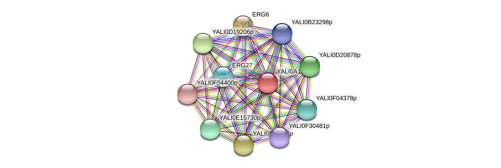 XP_500188.1 protein (Yarrowia lipolytica) - STRING interaction network