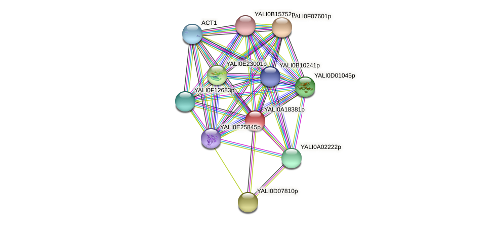 XP_500200.1 protein (Yarrowia lipolytica) - STRING interaction network