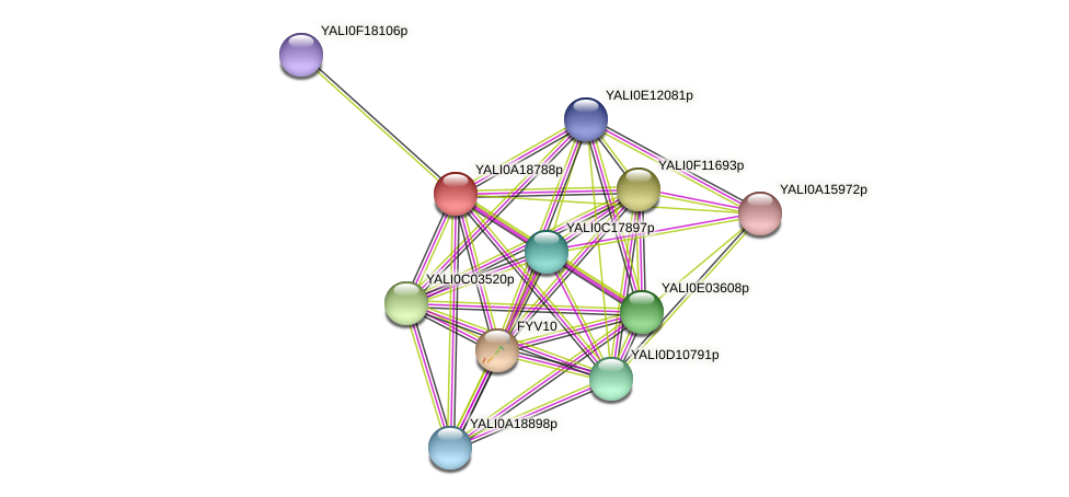 XP_500218.1 protein (Yarrowia lipolytica) - STRING interaction network
