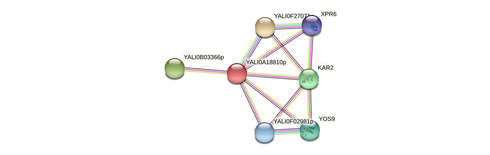 XP_500219.1 protein (Yarrowia lipolytica) - STRING interaction network