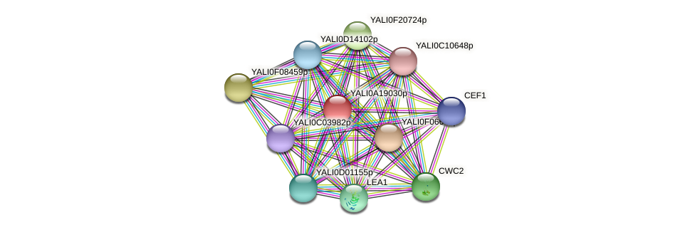 XP_500227.1 protein (Yarrowia lipolytica) - STRING interaction network