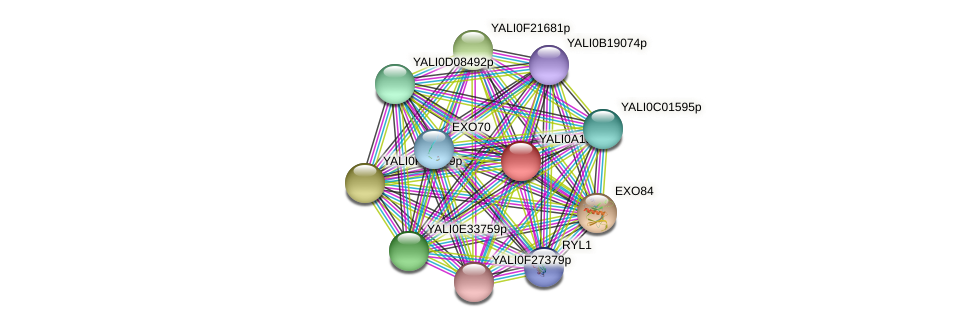 XP_500228.1 protein (Yarrowia lipolytica) - STRING interaction network