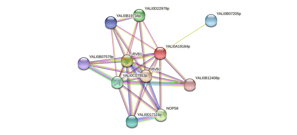 XP_500234.1 protein (Yarrowia lipolytica) - STRING interaction network