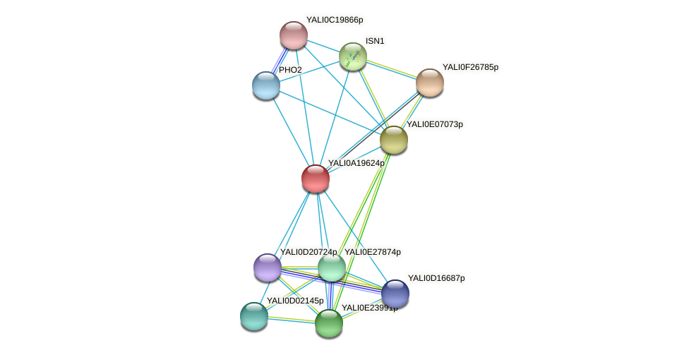XP_500250.1 protein (Yarrowia lipolytica) - STRING interaction network