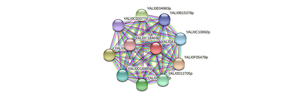 XP_500254.1 protein (Yarrowia lipolytica) - STRING interaction network