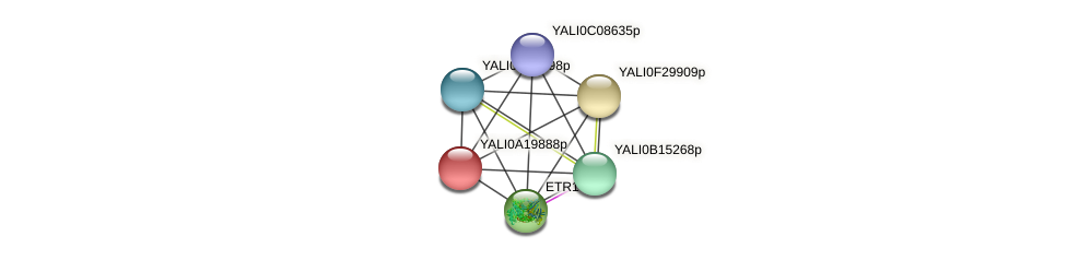 XP_500262.1 protein (Yarrowia lipolytica) - STRING interaction network