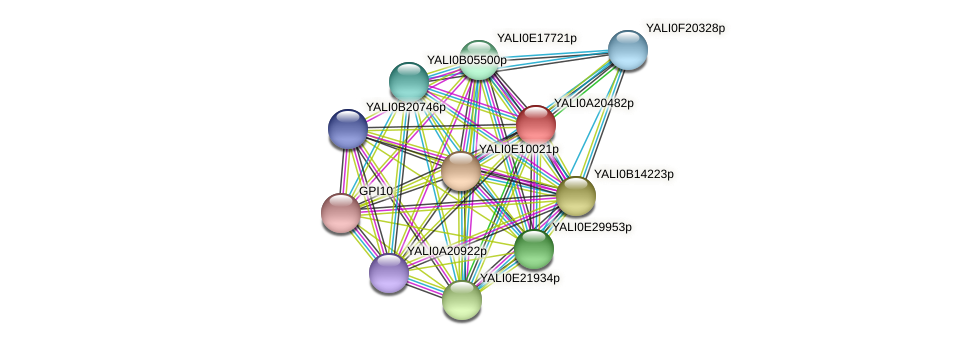 XP_500288.1 protein (Yarrowia lipolytica) - STRING interaction network