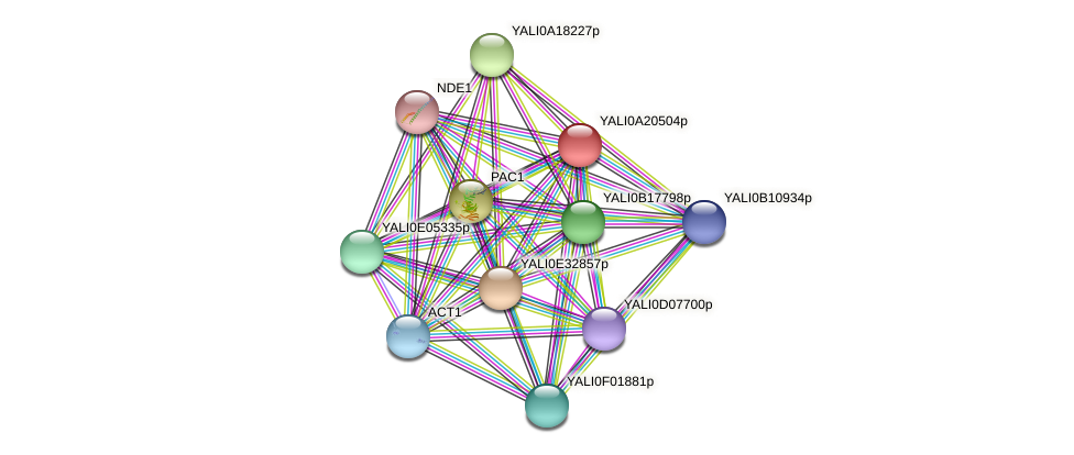 XP_500289.1 protein (Yarrowia lipolytica) - STRING interaction network
