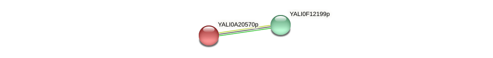 XP_500293.1 protein (Yarrowia lipolytica) - STRING interaction network