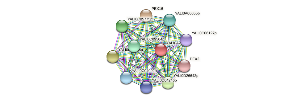 XP_500310.1 protein (Yarrowia lipolytica) - STRING interaction network