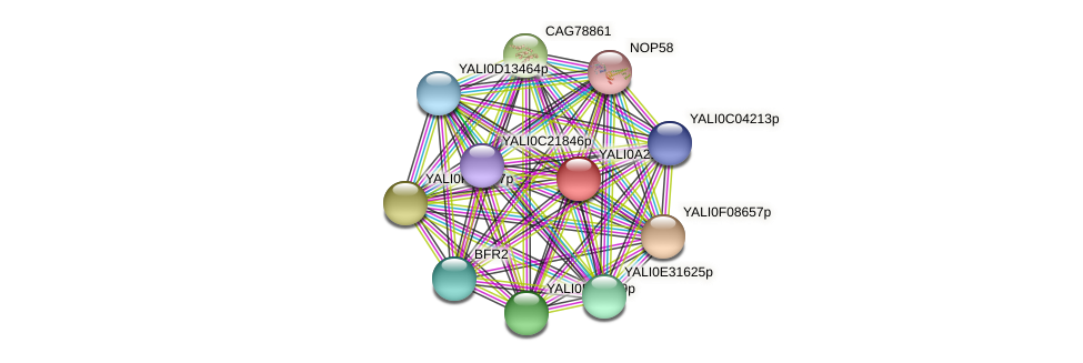 XP_500322.1 protein (Yarrowia lipolytica) - STRING interaction network