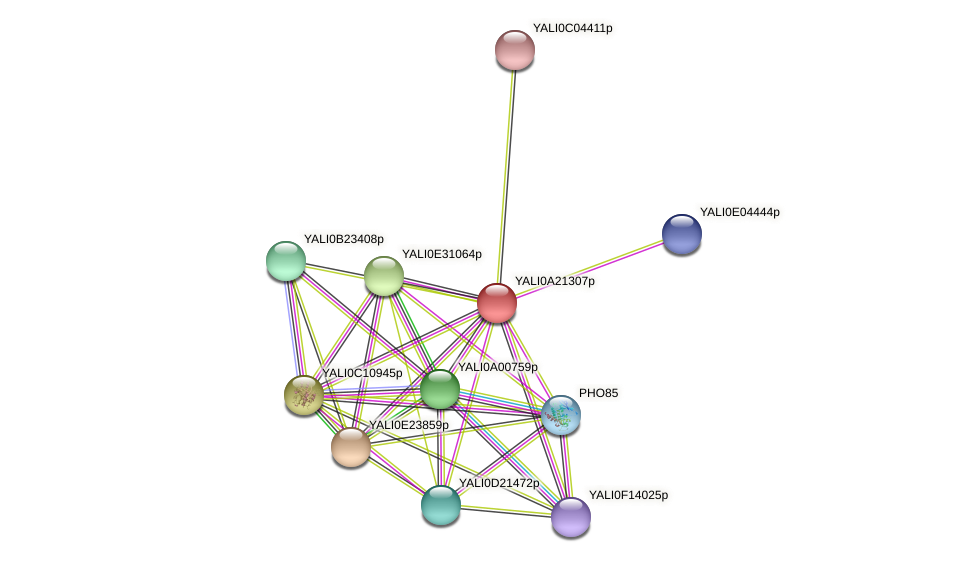 XP_500326.1 protein (Yarrowia lipolytica) - STRING interaction network