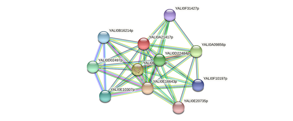XP_500331.1 protein (Yarrowia lipolytica) - STRING interaction network