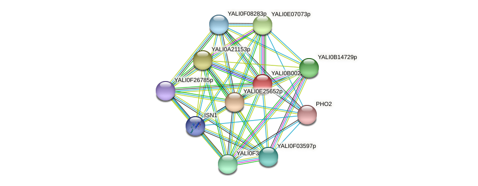XP_500338.1 protein (Yarrowia lipolytica) - STRING interaction network