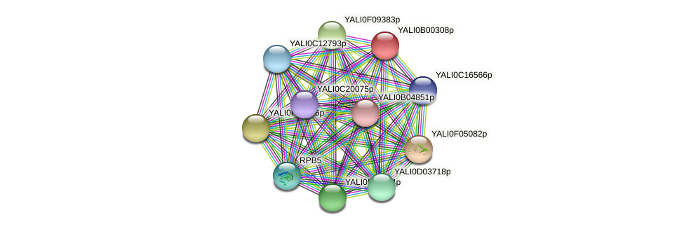 XP_500341.1 protein (Yarrowia lipolytica) - STRING interaction network