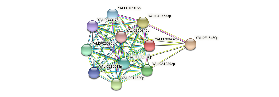 XP_500346.1 protein (Yarrowia lipolytica) - STRING interaction network