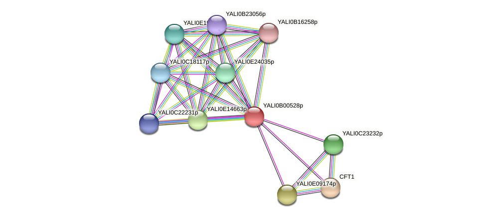 XP_500347.1 protein (Yarrowia lipolytica) - STRING interaction network