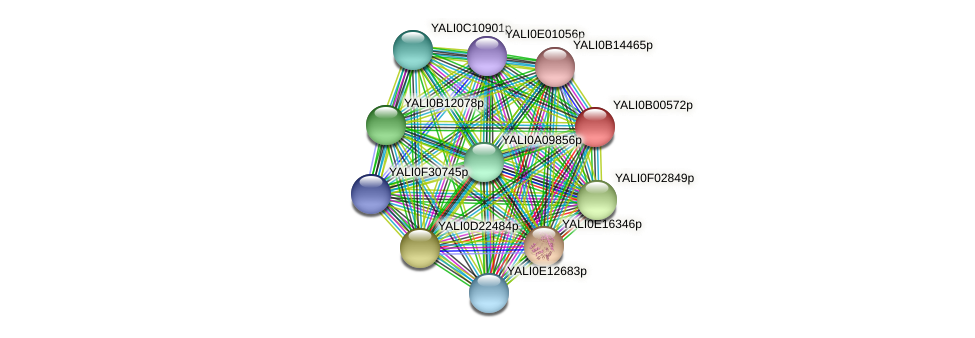 XP_500349.1 protein (Yarrowia lipolytica) - STRING interaction network