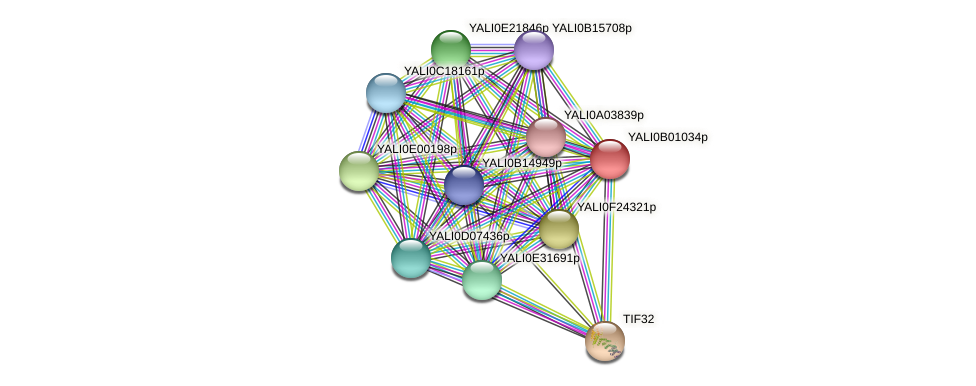 XP_500370.1 protein (Yarrowia lipolytica) - STRING interaction network
