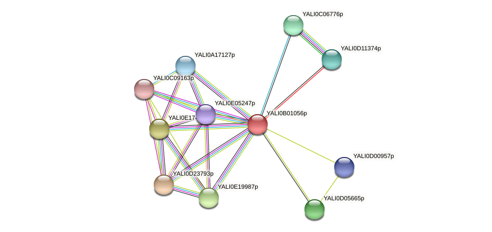 XP_500371.1 protein (Yarrowia lipolytica) - STRING interaction network