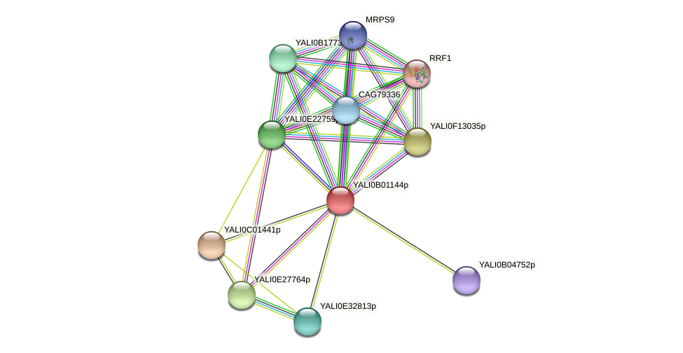 XP_500374.1 protein (Yarrowia lipolytica) - STRING interaction network