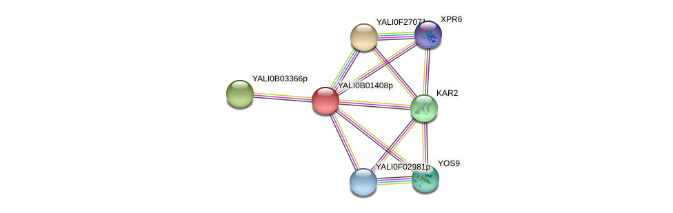 XP_500385.1 protein (Yarrowia lipolytica) - STRING interaction network