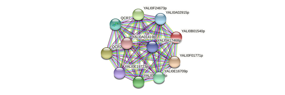 XP_500389.1 protein (Yarrowia lipolytica) - STRING interaction network
