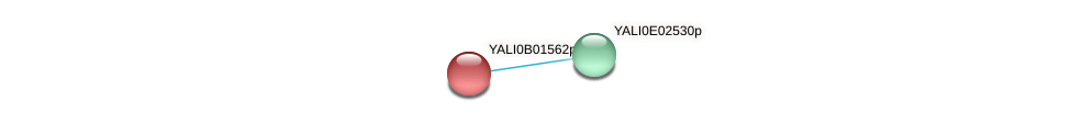XP_500390.1 protein (Yarrowia lipolytica) - STRING interaction network
