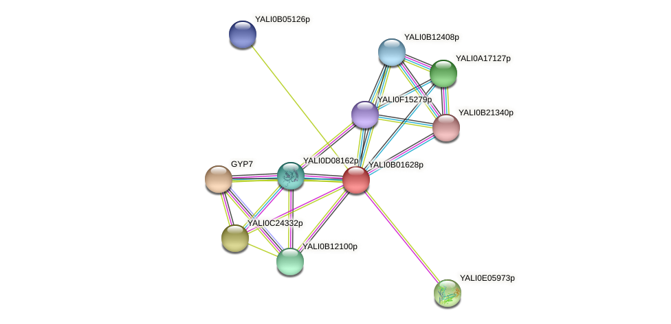 XP_500393.1 protein (Yarrowia lipolytica) - STRING interaction network