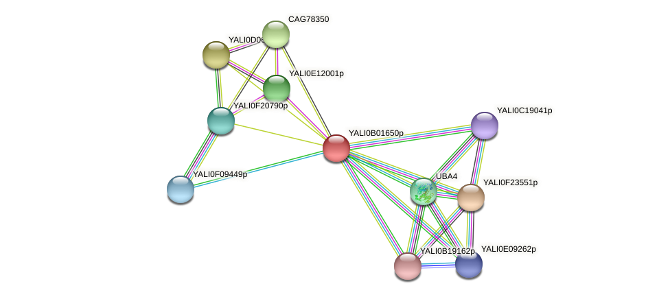 XP_500394.1 protein (Yarrowia lipolytica) - STRING interaction network