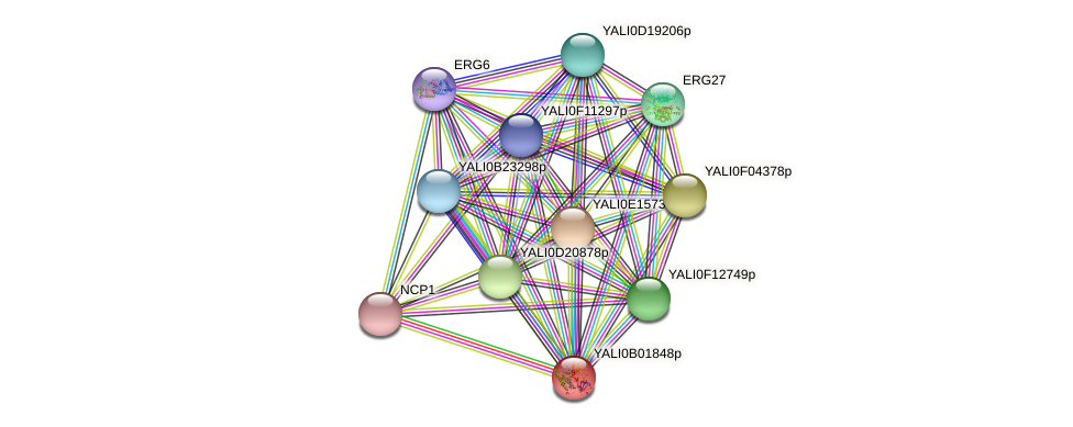 XP_500402.1 protein (Yarrowia lipolytica) - STRING interaction network