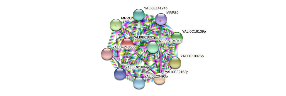 XP_500404.1 protein (Yarrowia lipolytica) - STRING interaction network